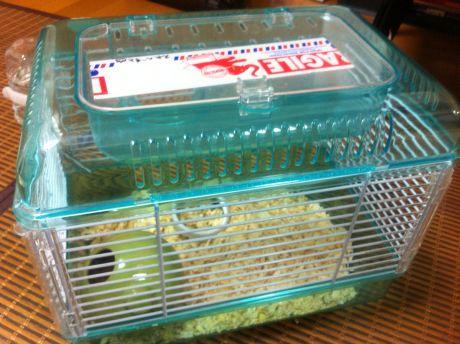 hamster_201208_2.jpg