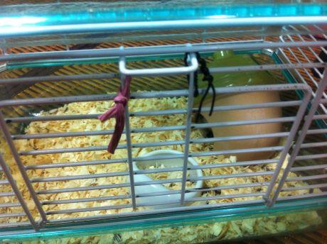 hamster_201208_3.jpg