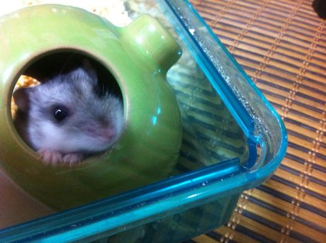 hamster_201208_4.jpg