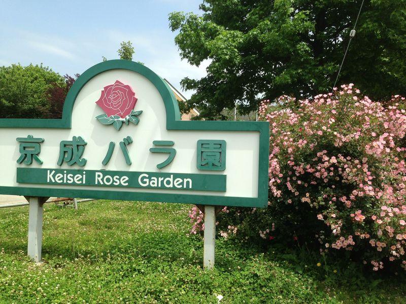 keisei_rose_garden_1.jpg