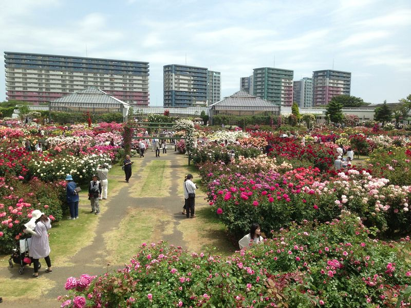 keisei_rose_garden_6.jpg